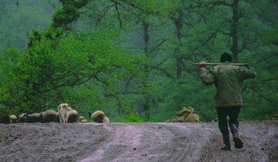 خروج از حقایق برای تنفس مصنوعی جنگل